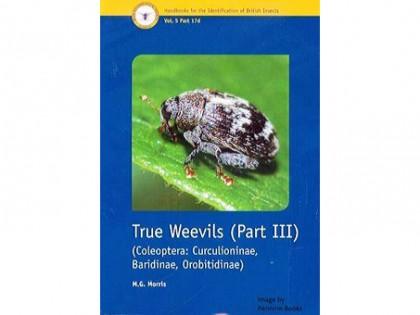True Weevils part III 1