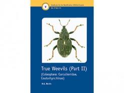 True Weevils Part II