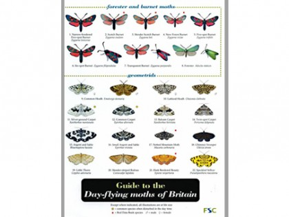Guide to the Day-flying moths 1