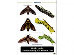 Guide to the Hawkmoths
