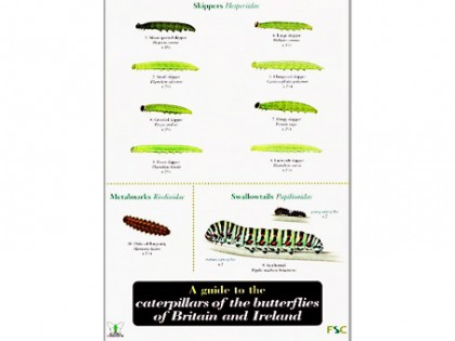 A guide to caterpillers of the butterflies 1