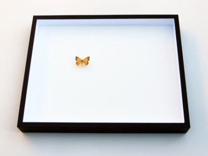 Zwarte insectendoos 40x50cm