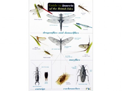 Guide to insects of British Isles 1