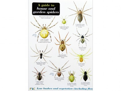 A guide to house and garden spiders 1