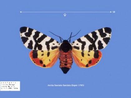 CDrom: Die Spinner und Schwarmer Europas 1