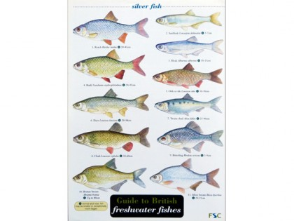 Guide to freshwater fishes 1