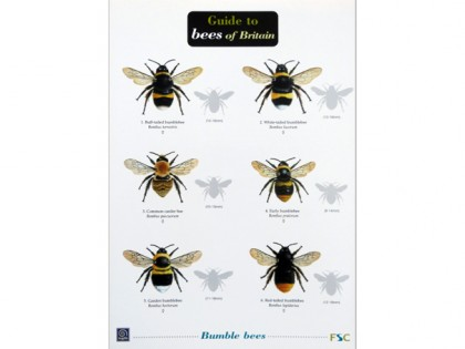 Guide to bees of Britain 1