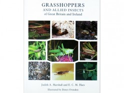 Grasshoppers and allied Insects