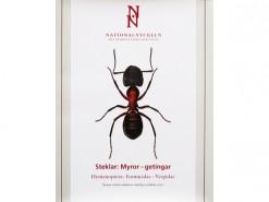 Formicidae - Vespidae