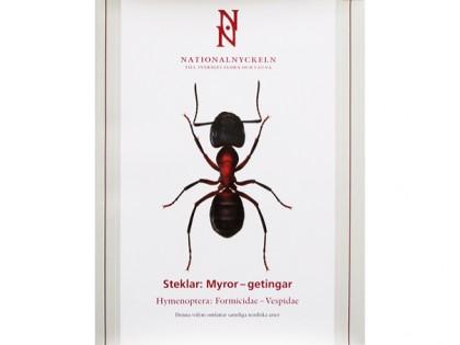 Formicidae – Vespidae 1