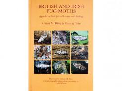 British and Irish Pug Moths - the Eupitheciini