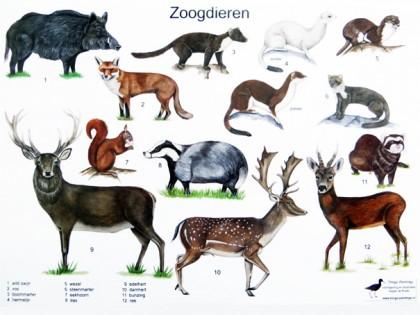 Herkenningskaart Zoogdieren 1