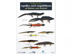 Guide to the reptiles and amphibians