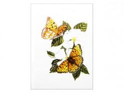 Wenskaarten Vlinders