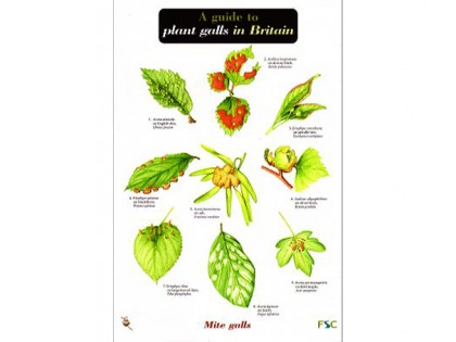 A guide to plant galls 1