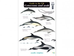 Guide to the Cetaceans and seals