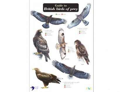 Guide to British birds of prey 1