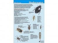 Het leven onder water + Waterkwaliteit bepalen