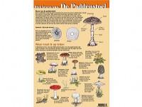 Het leven van de paddenstoel