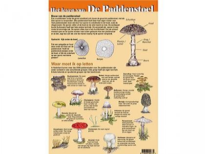 Het leven van de paddenstoel 1
