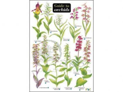 Guide to Orchids 1