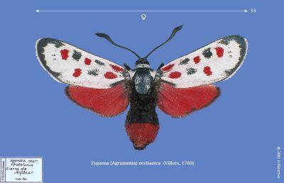 CDrom: Die Zygaeniidae der Palaearktis 1
