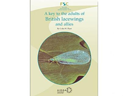 7.503 British lacewings nieuw