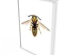 Andere insecten