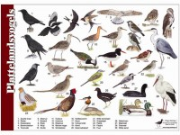 plattelandsvogels
