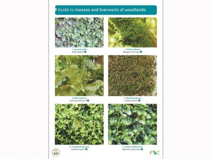 OP163 Woordland mosses and liverworts
