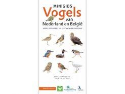 Minigids_Vogel_van_Nederland_en_België