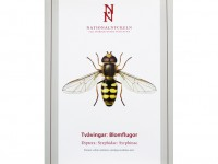 SFF08 Tvavingar Diptera Syrphidae Syrphinae