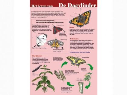EDU06 Het leven van De Dagvlinder
