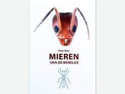 7.307 De mieren van de Benelux