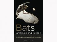 bats-bats-of-brittain