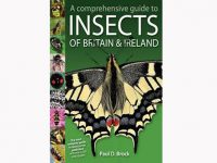 7.905 a-comprehensive-guide-to-insects