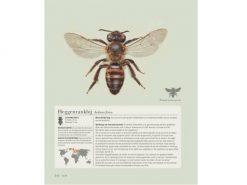 7.313 inhoud-bijen-1