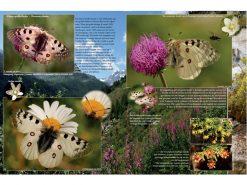 9.561 Romantische Vlinderboek voorbeeldpagina