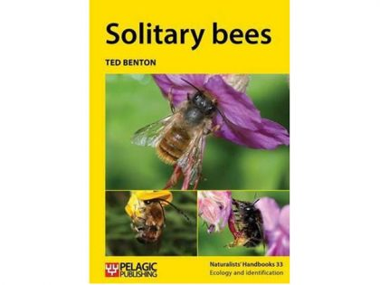 NH33 Soltary bees