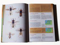 FZ01 vliegen-en-muggen-in-zeeland-binnen1