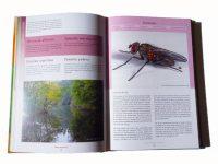 FZ01 vliegen-en-muggen-in-zeeland-binnen2