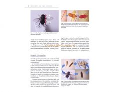 IMIC insect-microscopy- binnen