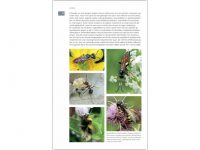 7.297 Veldgids Bijen binnen2