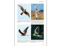 KNNV44 Roofvogels van Europa,Noord-Afrika en Midden Oosten binnen1