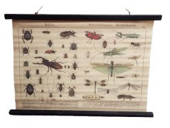 insekten-canvas-poster