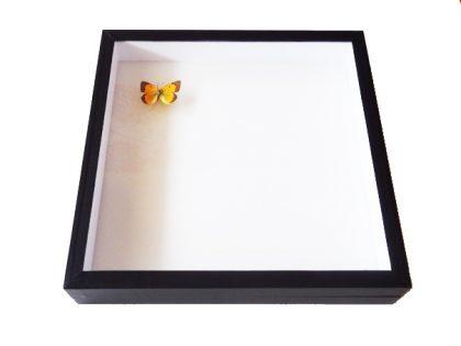 insectendoos-30-x30