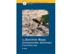 7.312 The Banchine Wasps