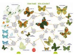 KNNV00 Speuren en vinden 35 zoekkaarten vlinders1