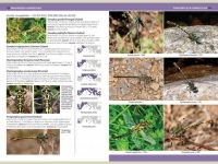 7.905a A Photographic Guide to Insects of Southern Europe binnen2