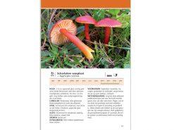 anwb-paddenstoelengids-1